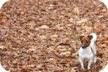 dog_in_leaves