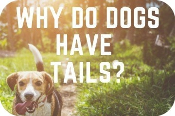 why_do_dogs_have_tails_artwork