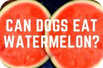 can_dogs_eat_watermelon_art