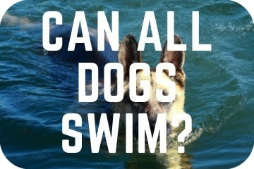can_all_dogs_swim