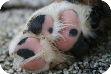 speckled_paw