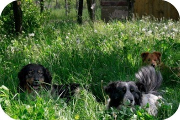 dogs_in_the_grass