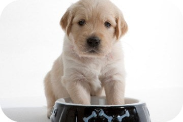 puppy_with_paws_in_bowl