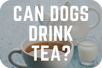can_dogs_drink_tea