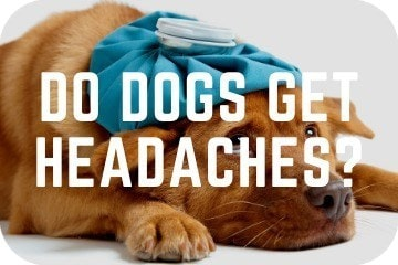do_dogs_get_headaches