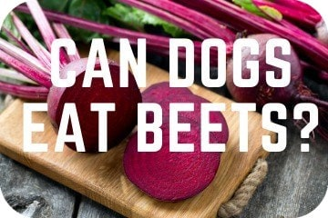 Can_dogs_eat_beets