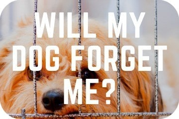 will_my_dog_forget_me_graphic