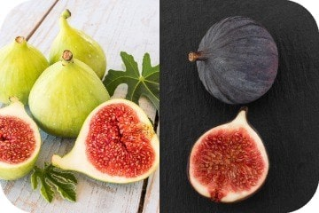 can_dogs_eat_figs