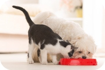 dog_and_cat_eating