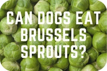 can_dogs_eat_sprouts