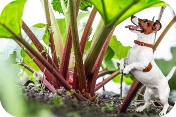 are_dogs_allowed_rhubarb