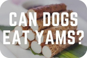 can_dogs_eaT_yams_graphic