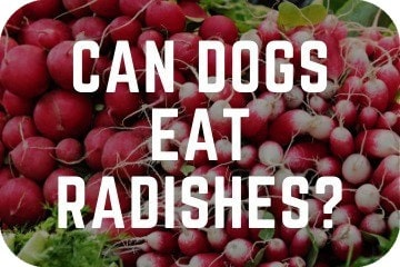 can_dogs_eat_radish