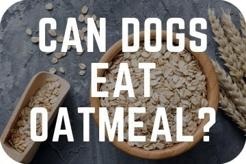 can_dogs_eat_oatmeal