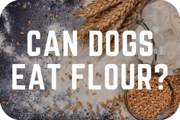 can_dogs_eat_flour_graphic