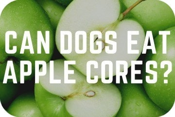 can_dogs_eat_apple_cores