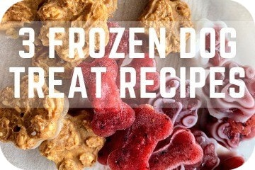 frozen_dog_treats