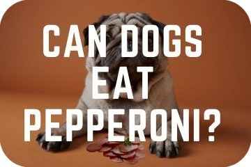 can_dogs_eat_pepperoni