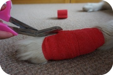 how_to_remove_a_dogs_bandage