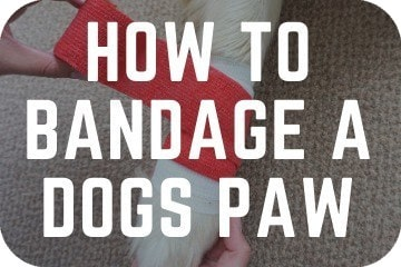 how_to_bandage_a_dogs_paw