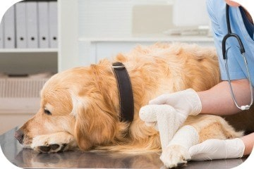 what_are_the_most_common_dog_injuries