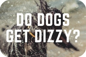 do_dogs_Get_dizzy