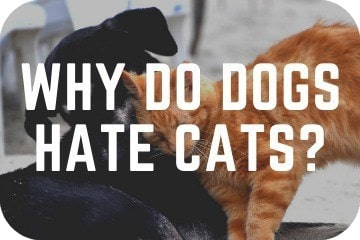 why_do_dogs_hate_cats