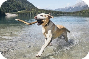 dog_with_stick