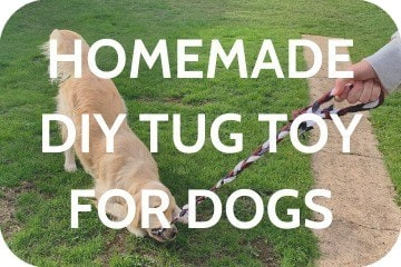 homemade_dog_toy