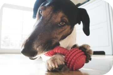 dog_with_toy