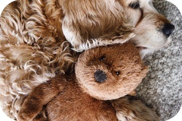 dog_and_cuddly_toy