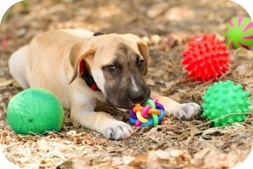 dog_with_toys