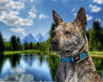 Load image into Gallery viewer, Wigzi Reflective and Waterproof Collars - Uptown Pups