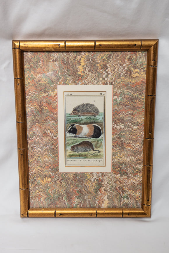 Antique Framed Guinea Pig Print