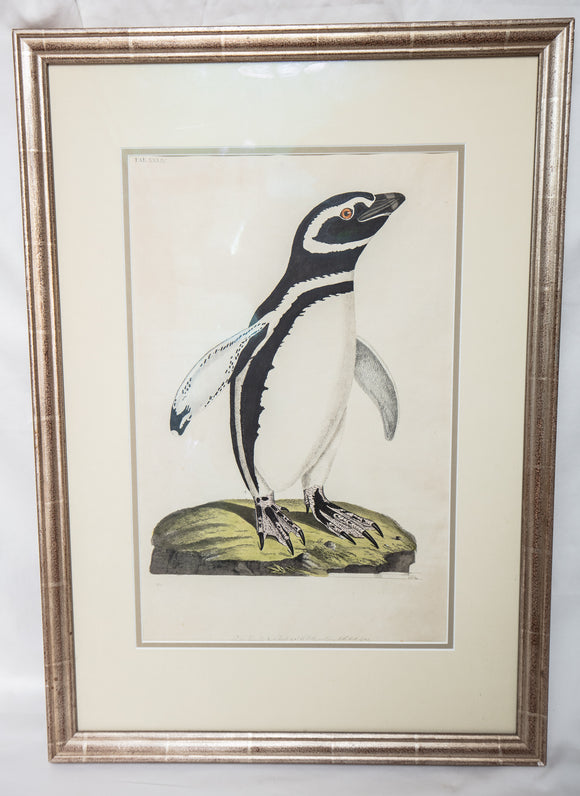 Antique Silver Gilt Framed Penguin Print