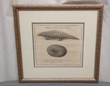 Antique Animal Print in Silver Frame