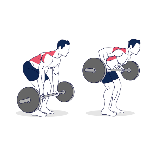 Barbell Bent Over Rows Supinated Grip Illustration