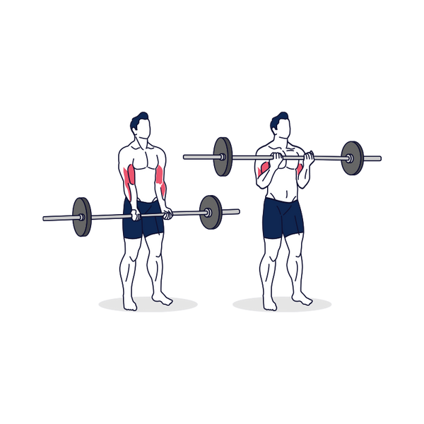 Barbell Curl Illustration