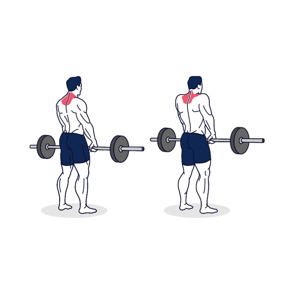 Barbell Shrug Illustration