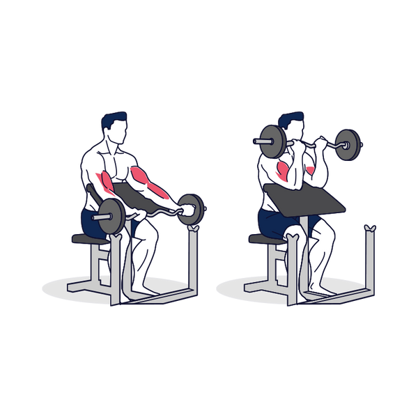 EZ Barbell Preacher Curl Illustration