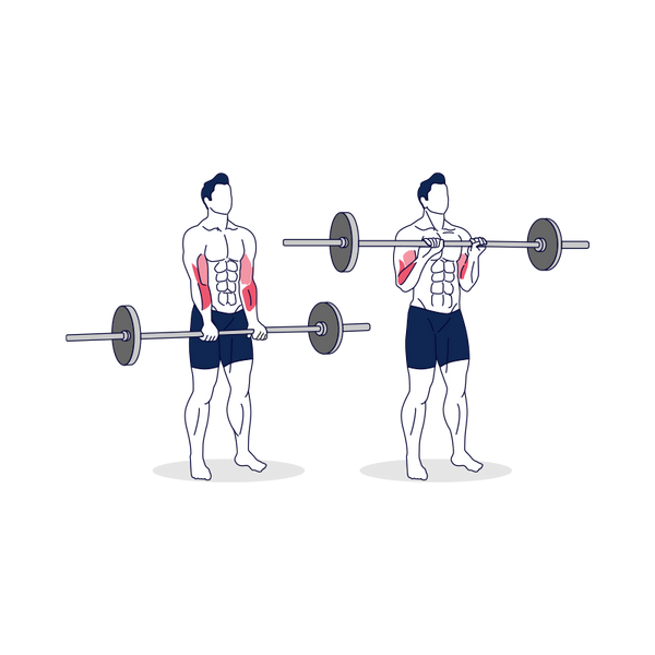 Reverse Barbell Curl Illustration