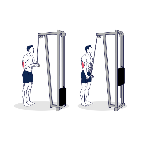 Reverse Grip Cable Triceps Extension with Barbell Illustration
