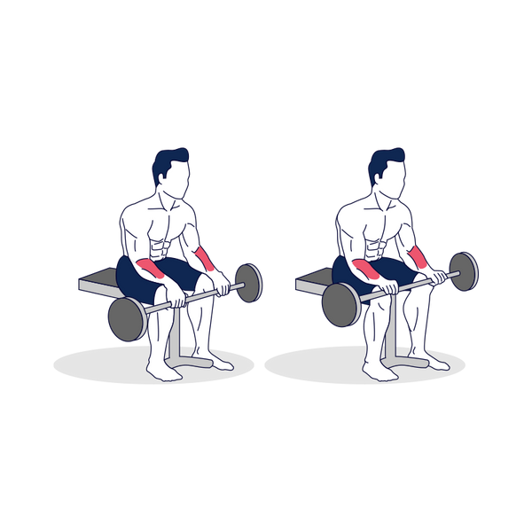 Seated Barbell Wrist Extension Illustration
