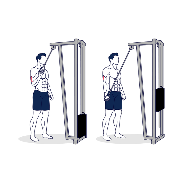 Single-Arm Cable Triceps Extension with Supinated Grip Illustration