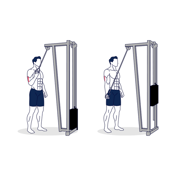 Single-Arm Cable Triceps Extension Illustratrion