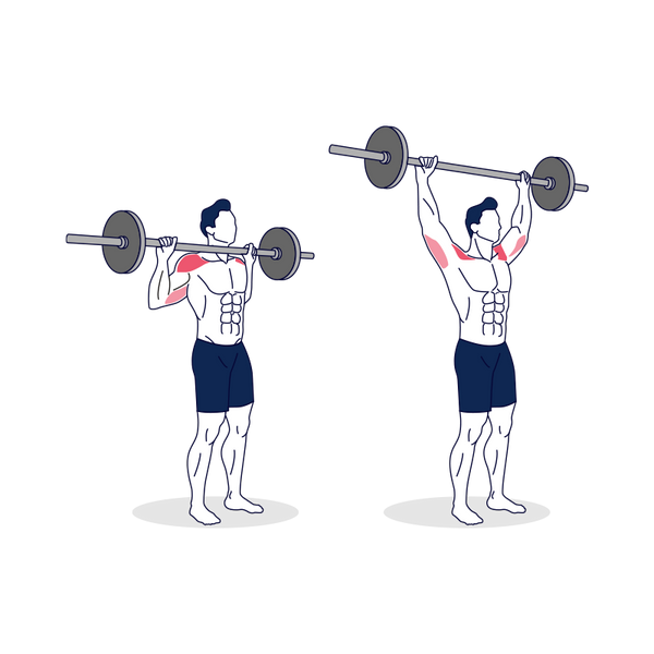 Standing Barbell Shoulder Press Illustration