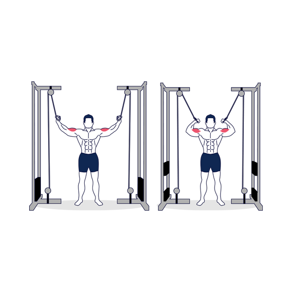 Standing High Pulley Cable Curl Illustration