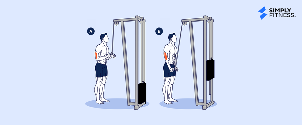 Triceps Pressdown Illustration
