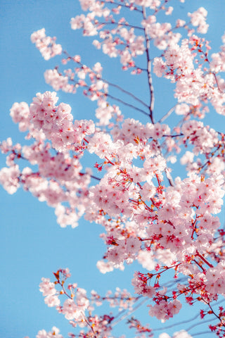 Spring traditions from around the world