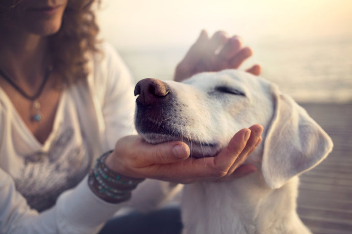Soothe Aches and Anxiety: How to Safely Use CBD for Pets